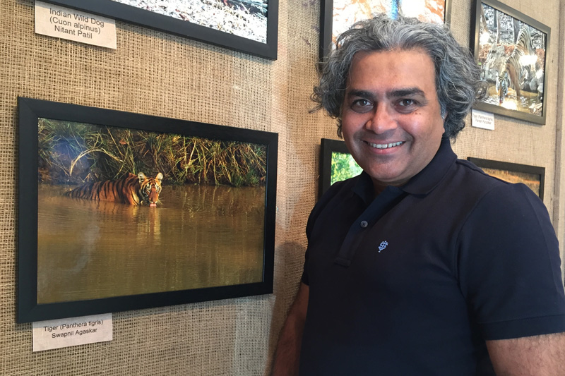 Tiger image displayed at NEST Photography competition