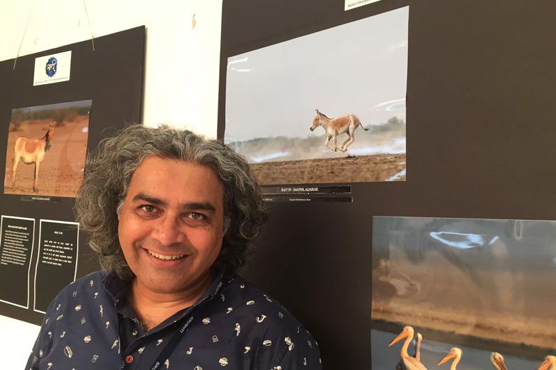 Srushti Wildlife Photography Exhibition - Indian Wild Ass