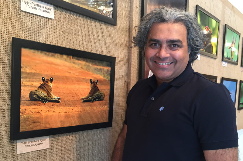 Tigers from Tadoba at NEST Photography competition