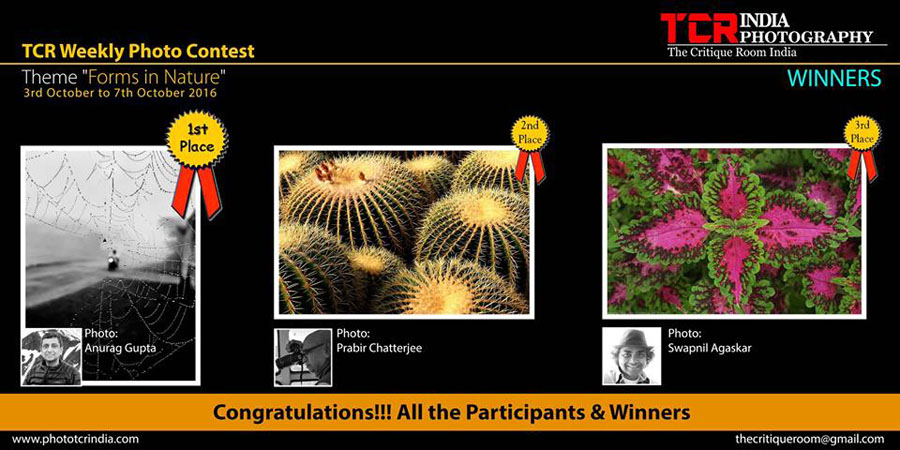 Third Prize recognition on TCR - Theme 'Forms in Nature'