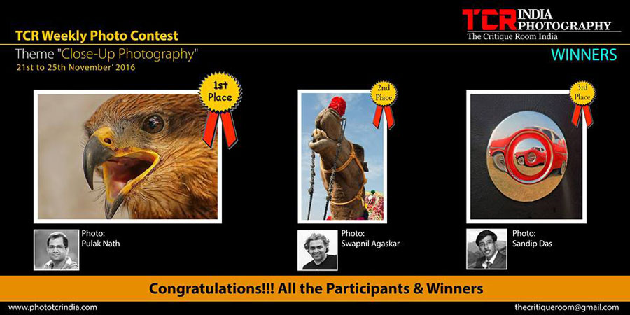 Second Prize recognition on TCR - Theme 'Close-up Photography'