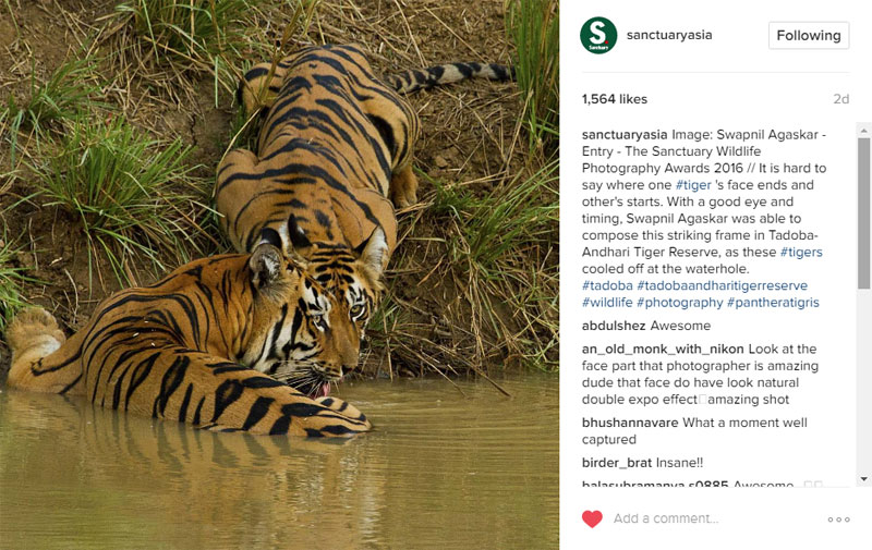 Sanctuary Asia - Instagram