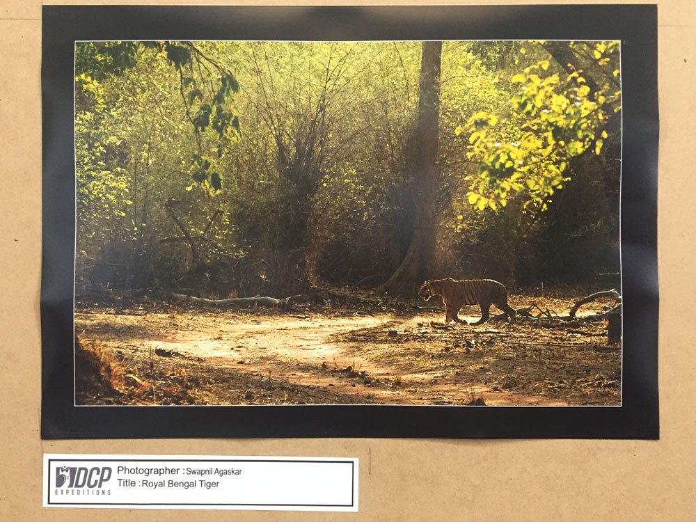 DCP Wildlife Photography Exhibition, Nashik